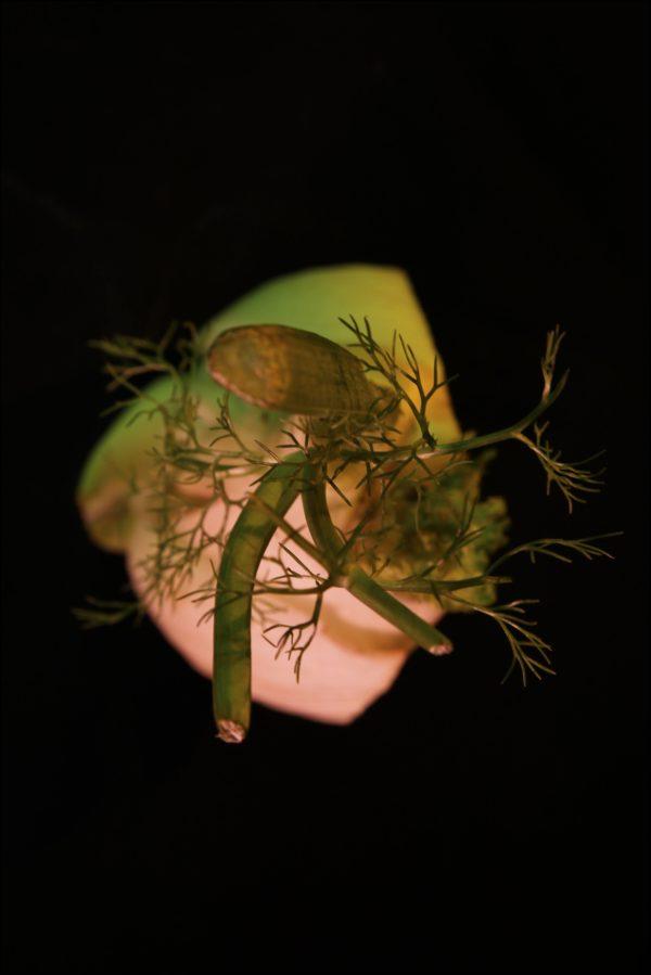 Legumes-site-10