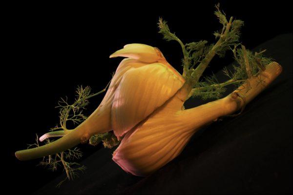 Legumes-site-11