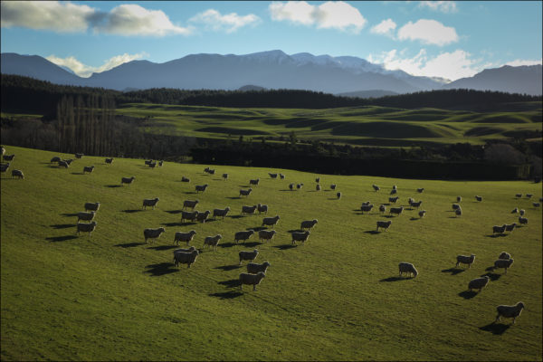 NZ-site-1